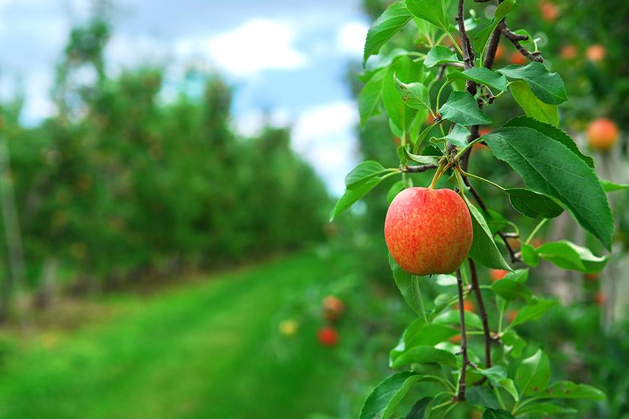 abono-ecologico-ventajas