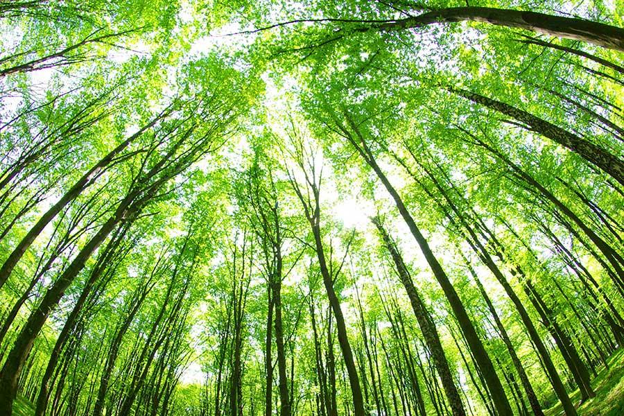 empresa-comprometidos-medio-ambiente
