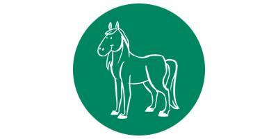 equino-fondo-verde