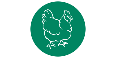 gallinacea-fondo-verde